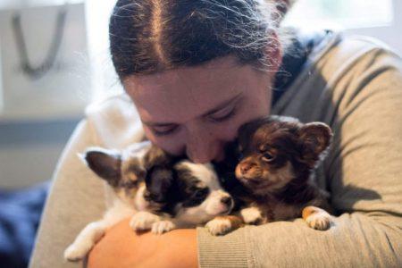 Kosten Chihuahua