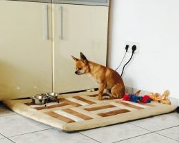 Chihuahua Essen