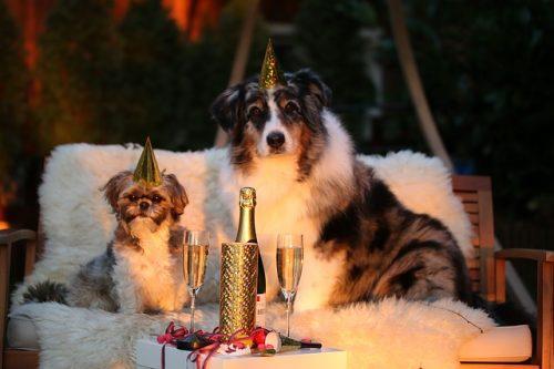 Hund Silvester, Silvesterangst bei Hunden, Neujahr