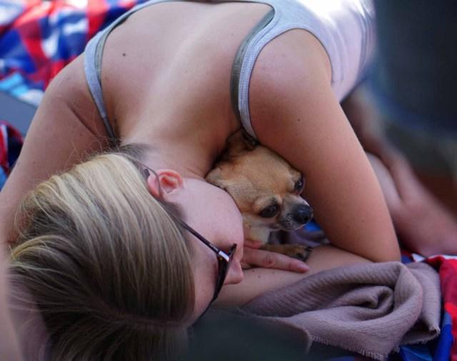 CHihuahua Welpe Hund Lieblingsmensch Bezugsperson