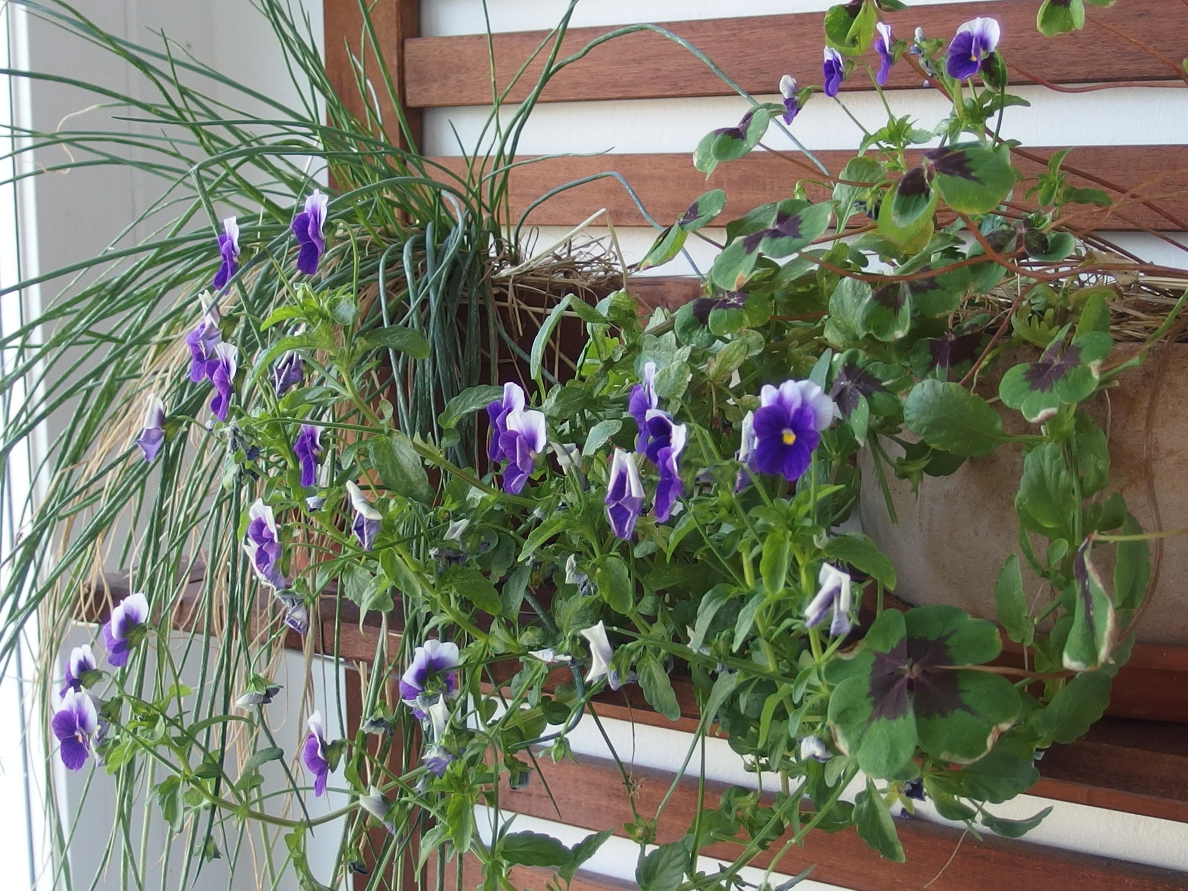 Die Balkon-Challenge im Juni