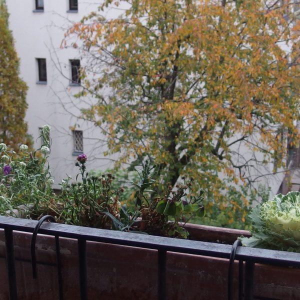 Die Balkon-Challenge im November