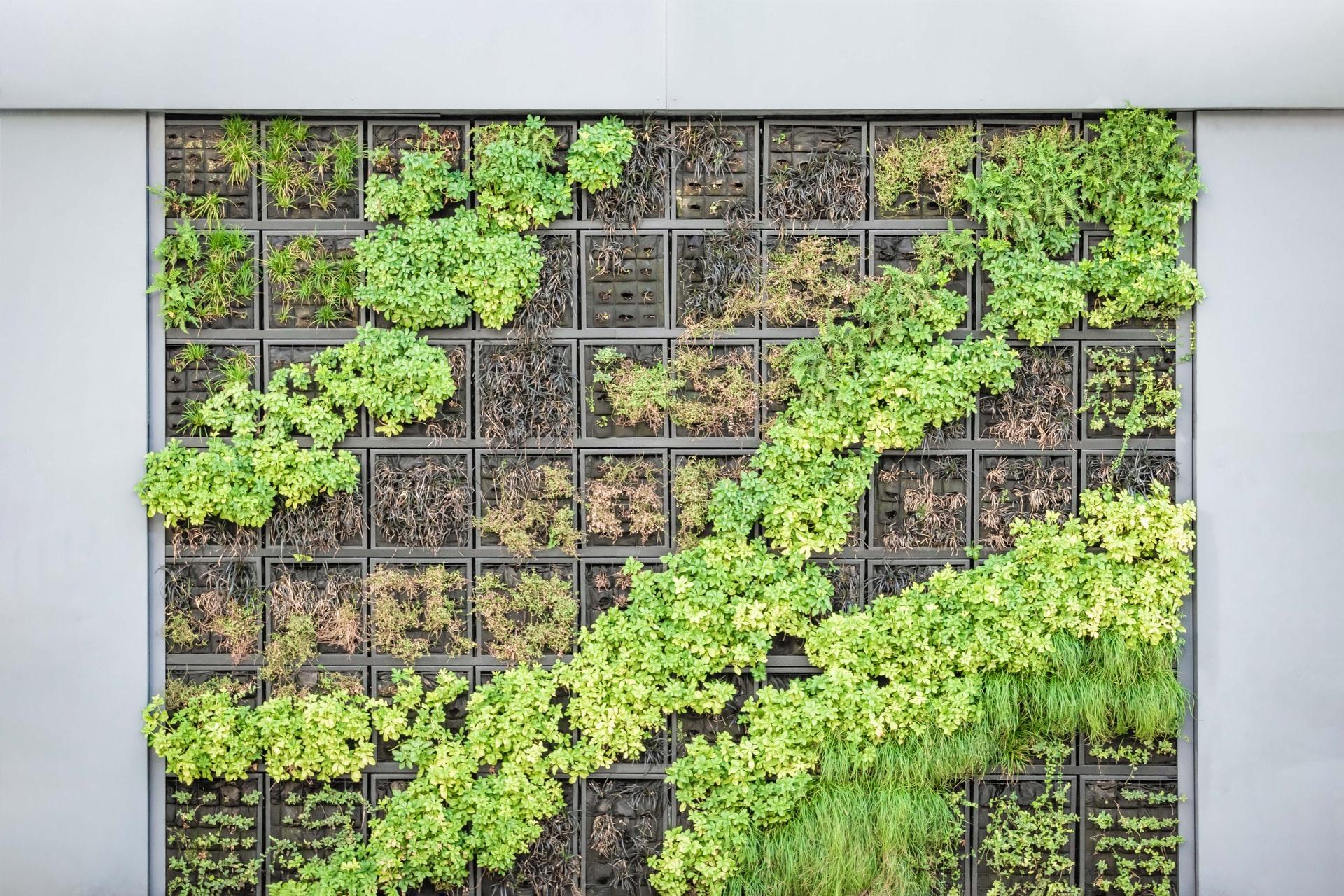 Vertikal Gärtnern: die dritte Dimension erobern
