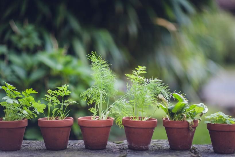 Gartenarbeit im Juni: auch Kräuter können noch ausgesät werden.