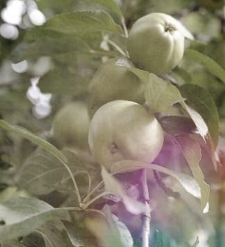 Mood, Äpfel – meindaruma