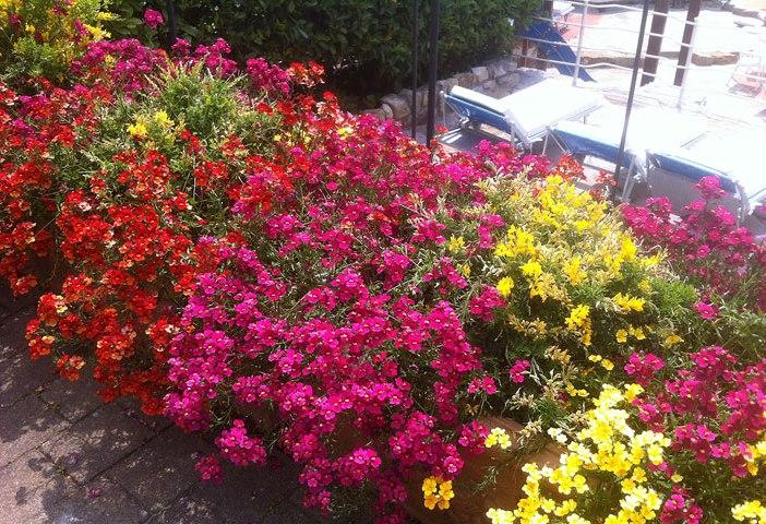 Blumenpracht-im-hotelpark