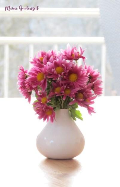 Flower-Friday - Chrysanthemen aus dem Garten nach Schneebruch gerettet