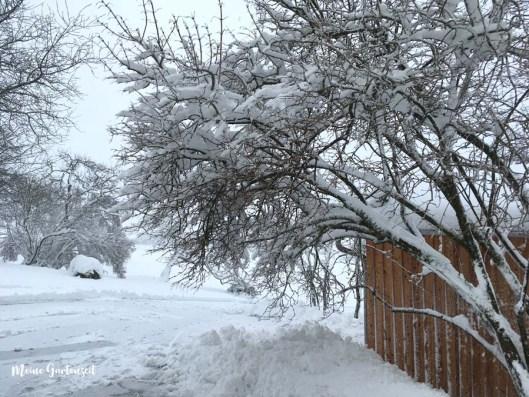 Gartenarbeiten im Januar , was ist im schneereichen und frostigen Monat zu tun