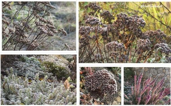 Frozen Garden - eisige Schönheiten im Garten