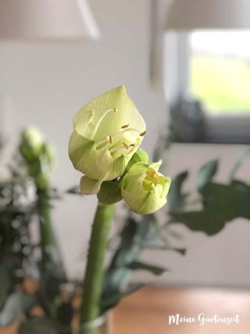 Winterliche Blumen - weißer Ritterstern mit Eukalyptus und Pistazie