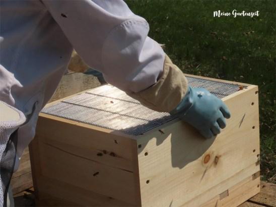 Umzug der Bienen in eine neue Beute