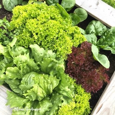 Gemüseanbau in Hochbeeten