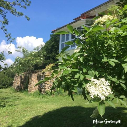 4 Mal Leckeres aus Holunderblüten