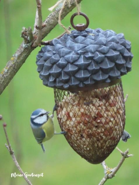 Erdnuss-Eichel für die Vogelfütterung