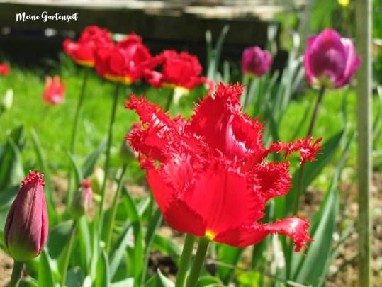 Papas Blumen