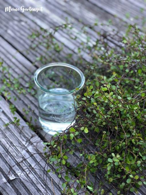 15 Minuten Garten-Deko für zu Hause mit Mühlenbeckia