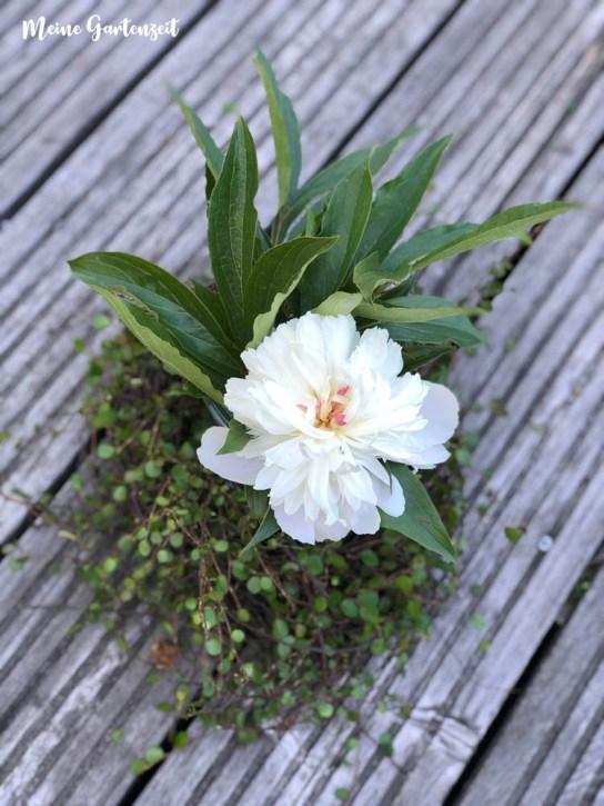 Floristische Deko für zu Hause mit Mühlenbeckia und Pfingstrose