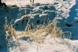 schnee-winterwiese