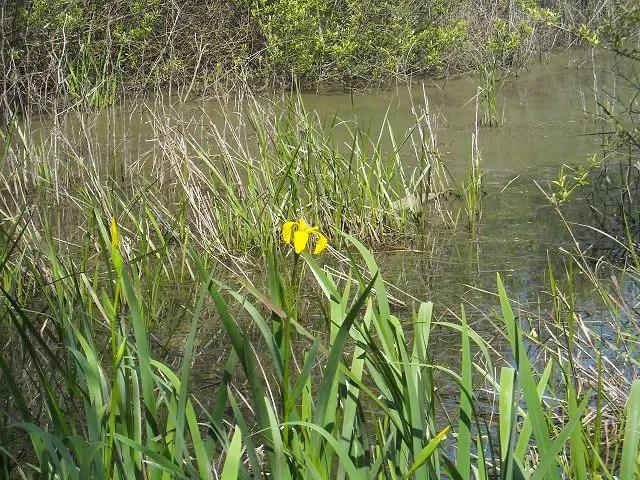 Blüte und See Foto: MConsoir
