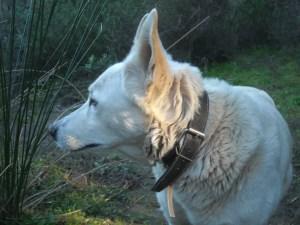 Kein Hund ist von Natur aus schlecht Foto: MConsoir