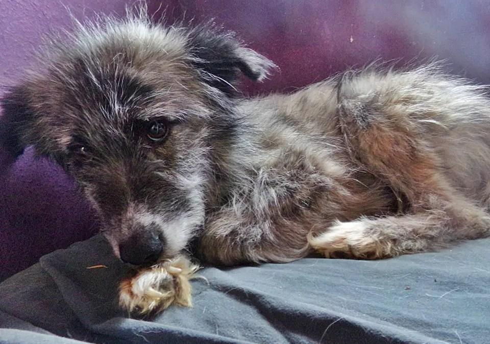 Ein Angsthund aus Rumänien – Interview mit Nuris Frauchen