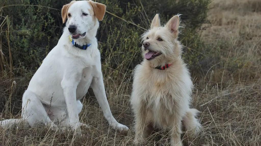 Verantwortung als Hundehalter: Teil 3 – Gesundheit und Bedürfnisse des Hundes