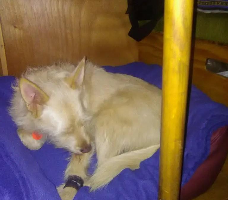 Hundebett im Test: Härtetest im Wohnmobil mit Knuffelwuff Hundebett