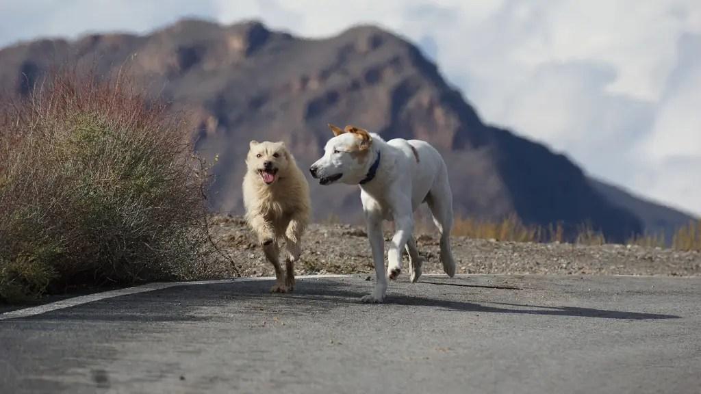 Muss ich mit meinem Hund Gassi gehen?