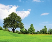 Tudo Sobre Meio Ambiente (3)