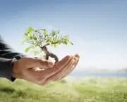 tudo-sobre-meio-ambiente14