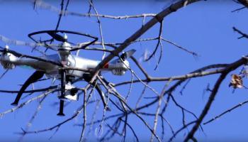 Salva-vidas de drones para canadenses naturalizados e outros cupins de ferro