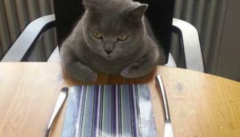 Internet das Coisas Inúteis agora deixa gatinhos com fome