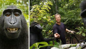Fotógrafo diz ter quebrado após disputa de direito autoral com macaco