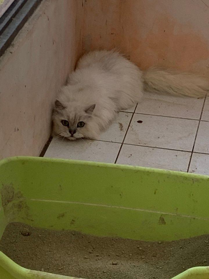 桃園市議員謝美英貓咪救援送養32