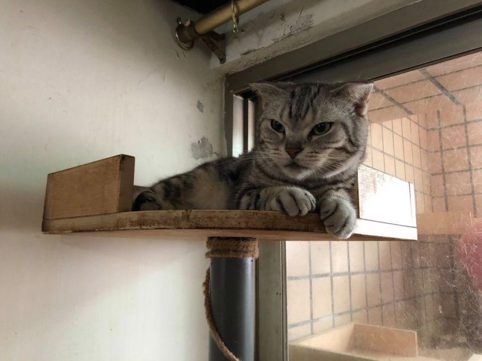 謝美英議員協助貓咪送養