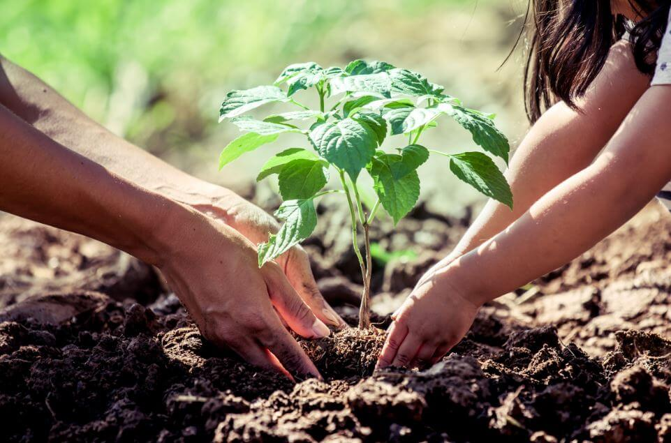 Qué debes saber antes de sembrar un árbol en casa? — Mejor con Salud