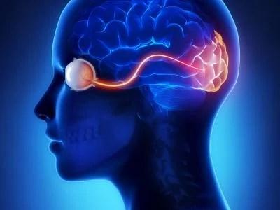 cortex-visual_2