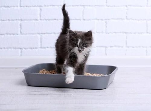 Caja de arena para los gatos.