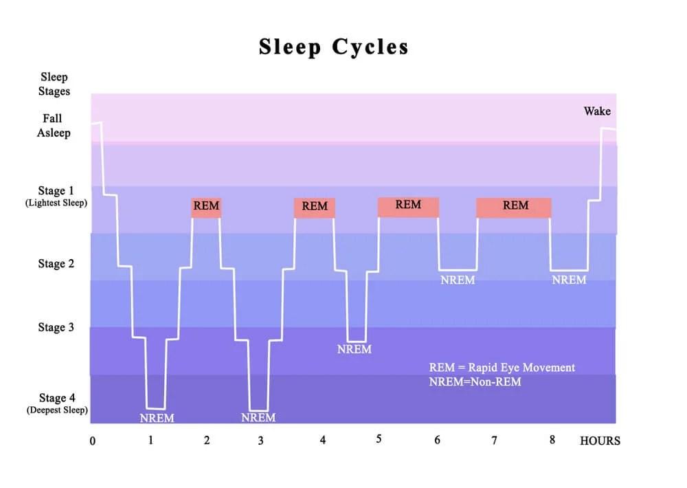 ciclos do sono ritmos circadianos insônia