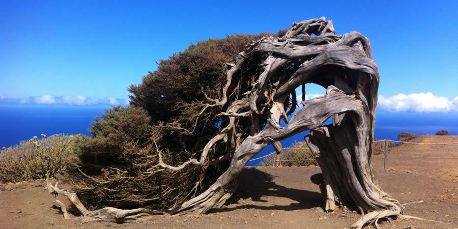 Mejor zona donde quedarse en El Hierro para visitar El Sabinar - Sabinosa