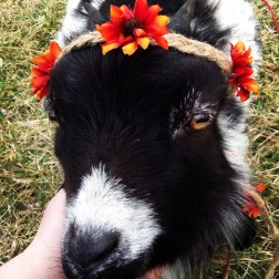 My Sweet ButterCup gets a flower Crown