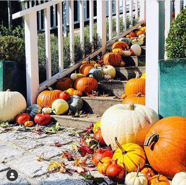 No pumpkins were harmed in JP's displays, they were all returned to a nearby Pumpkin farm! Instagram  @jonpaulclark