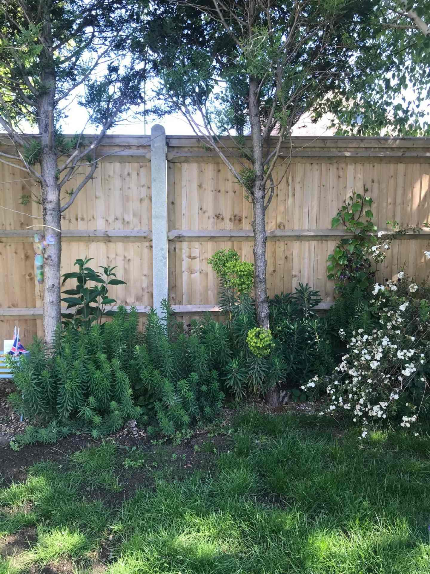 I present to you my fence! And patchy grass (we're working on it!)