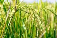 IL GRASSO CHE FA DIMAGRIRE