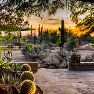 Sunset cactus arizona desert bohemian style