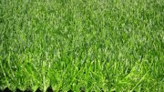 a grade quality artificial grass