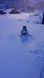Poor snowed in hydrant, but snow ceased falling