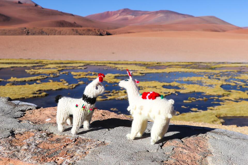 bofedal de Quepiaco a caminho do Salar de Tara deserto do Atacama