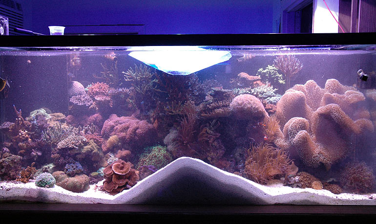 Image result for What Live Sand Is and How It Is Used in a Saltwater Aquarium