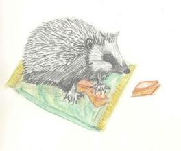 Hedgehog shoggi